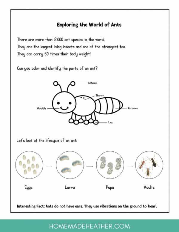 Backyard Ant Printable