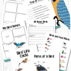Free Bird Printable Work Sheets