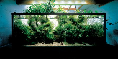 Nature Aquariums From Takashi Amano | Home Design And Interior