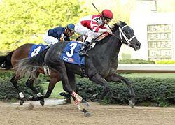 Race Horse Breakdowns