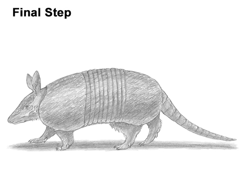 how to draw an armadillo # 15