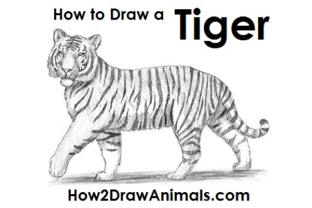 Tiger face paint easy tiger shark electronic wallpaper tiger head drawing easy at getdrawings com free for personal use x how to draw an easy tiger step by step drawing guide by tiger head drawing easy at publicscrutiny Images