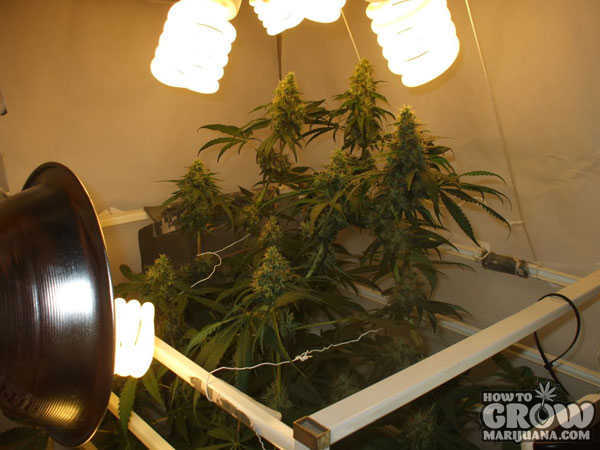 Cfl Pot Light Bulbs