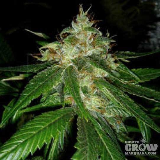Led Grow Light Spectrum