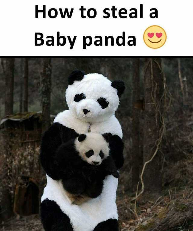 10 panda memes to make you smile! – how to survive in paris