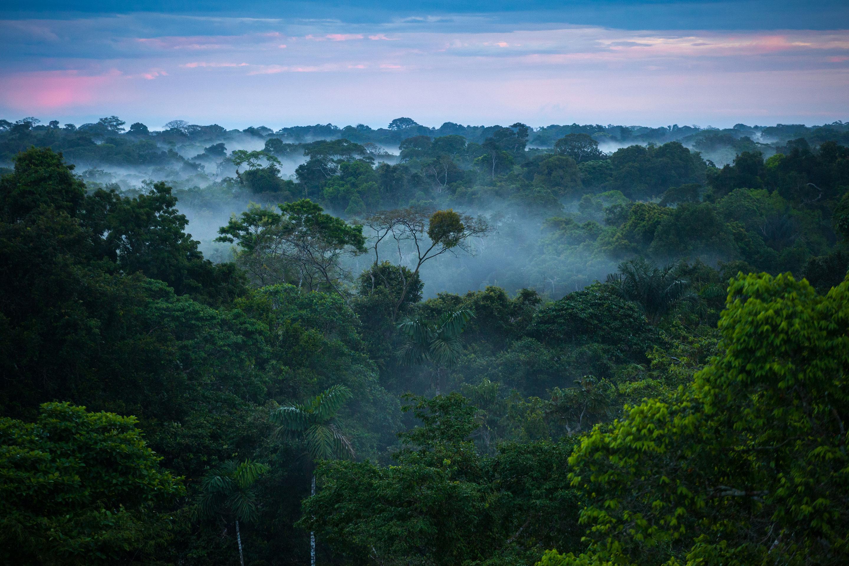 amazon rainforest location - HD1280×854