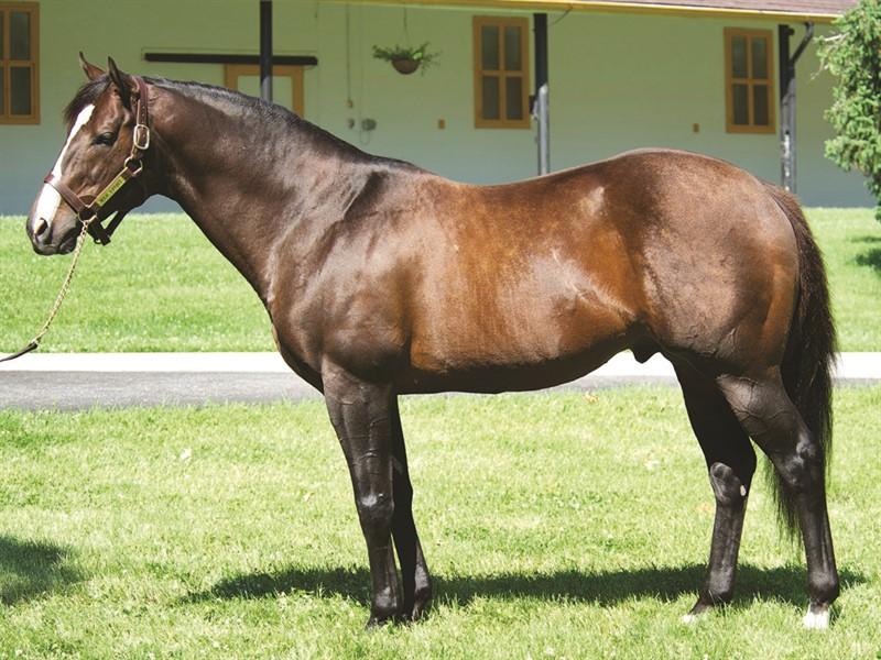 War Front Stallion Register Online