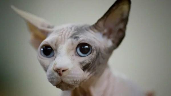 free cat sudbury ontario # 64