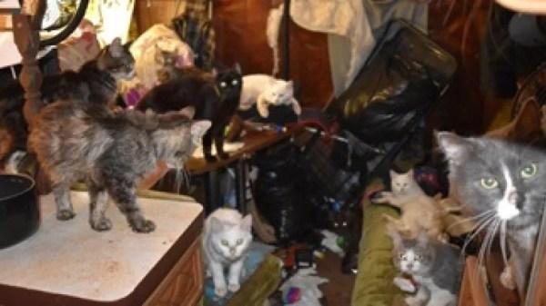 free cat sudbury ontario # 28