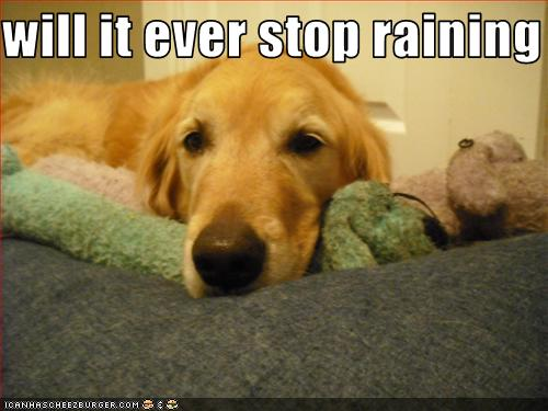 Friday Happy Animal Funny Memes