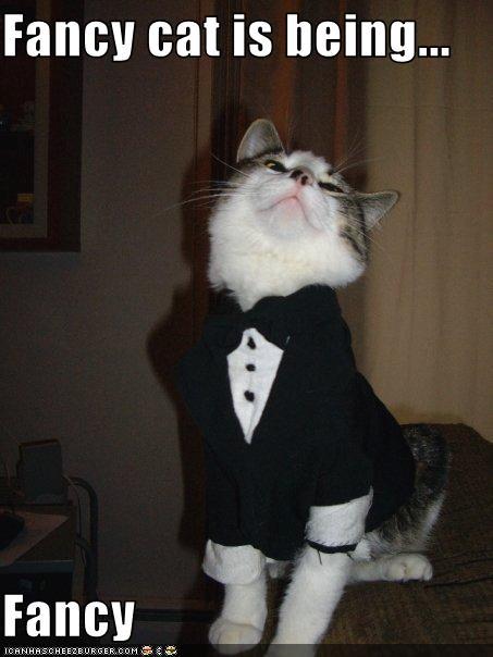Online Cartoons Funny Cat