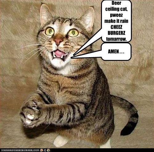 Deer Ceiling Cat Pweez Make It Rain Cheez Burgerz