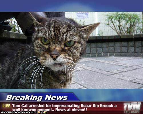Breaking news tom cat arrested impersonating oscar, funny cartoons pun cat