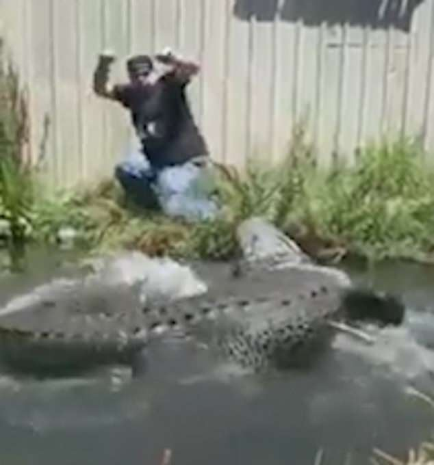 US man instantly regrets pulling alligator's tail for a ...