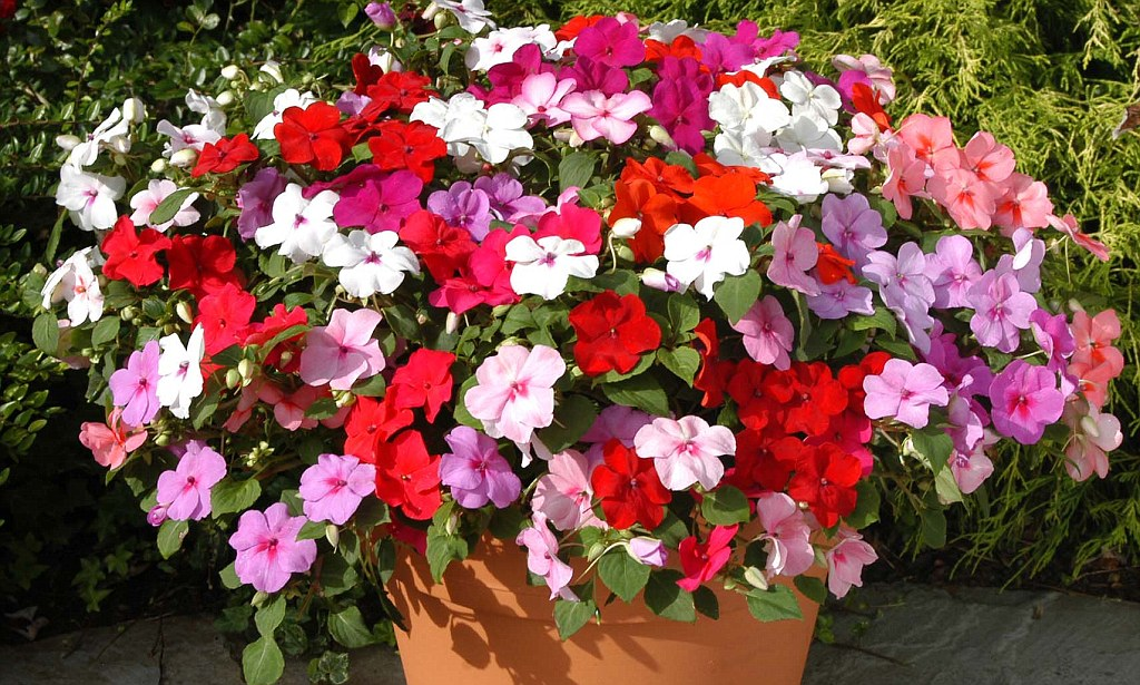 Homebase Hanging Baskets