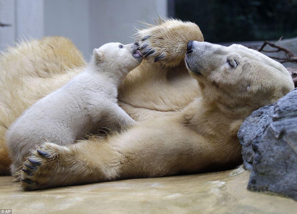Bear Ever Baby Cutest