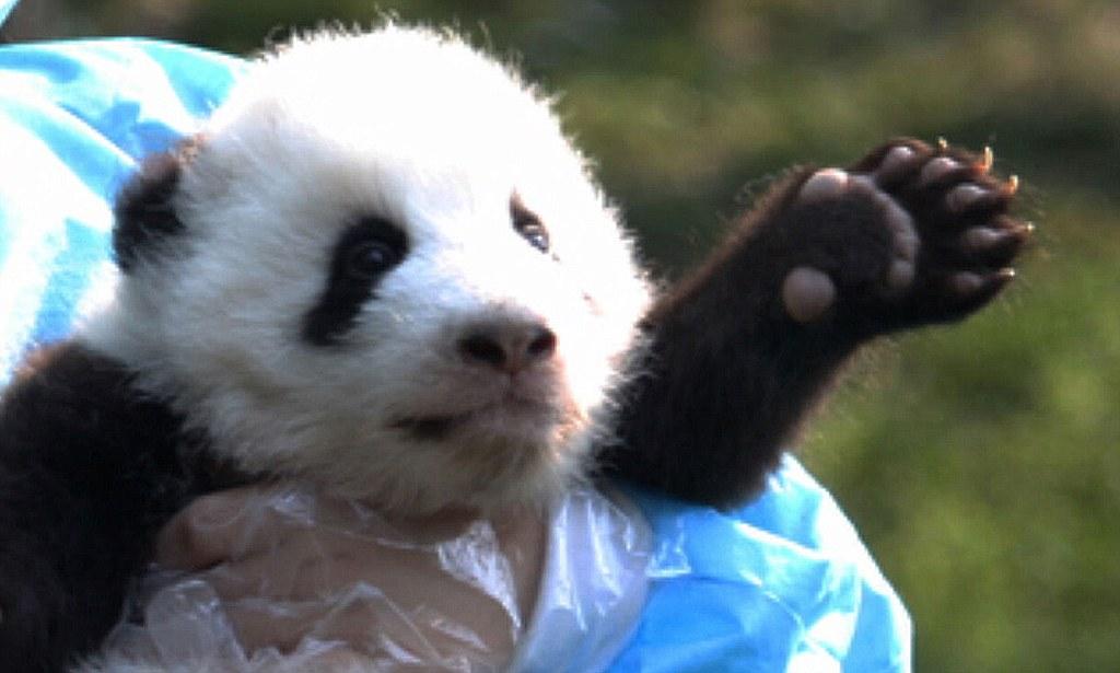 Ever Cutest Bear Baby
