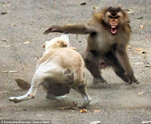 Monkey His Back