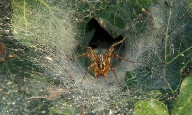 Spiders have PERSONALITIES too: Arachnids found to have ...