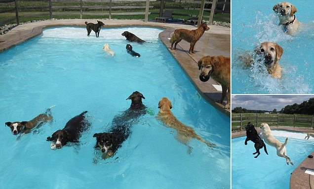Puppies Paddle Away At A Doggy Daycare Center Daily Mail