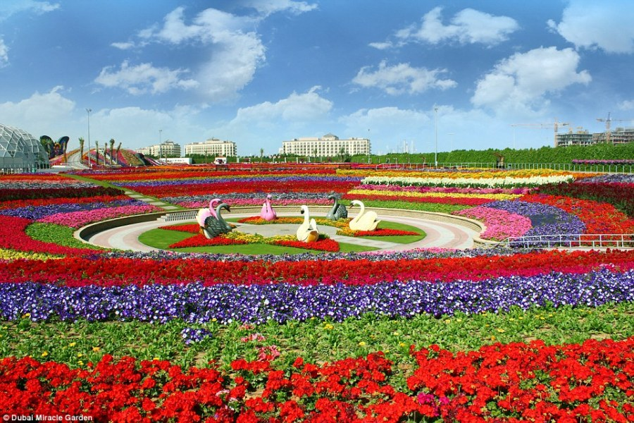 Lowrie Chin Post  The Dubai Miracle Garden Dubai Miracle Garden is world s biggest flower garden  It is situated in  the North West