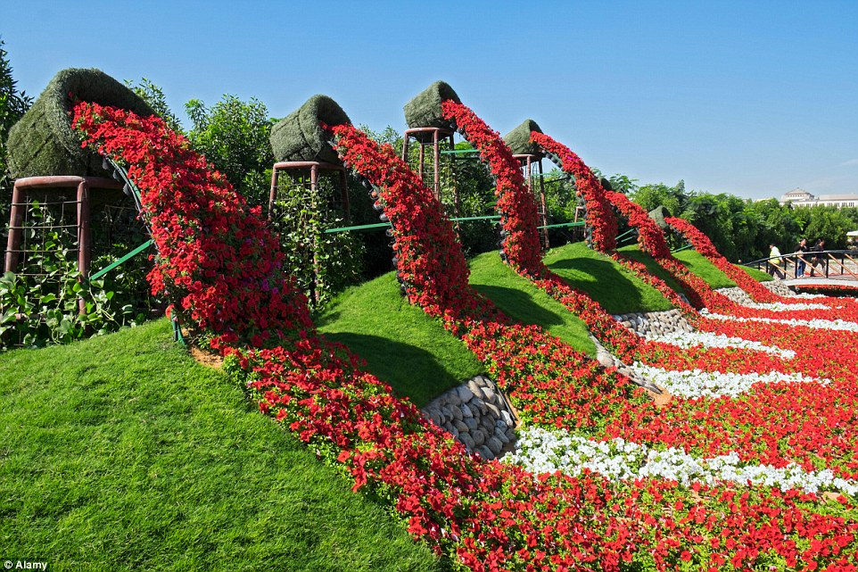 Rainbow coloured oasis with 45m flowers is in the middle of a Dubai     Dubai Miracle Garden has more than 45 million blooming flowers with  stunning colour combinations achieved through