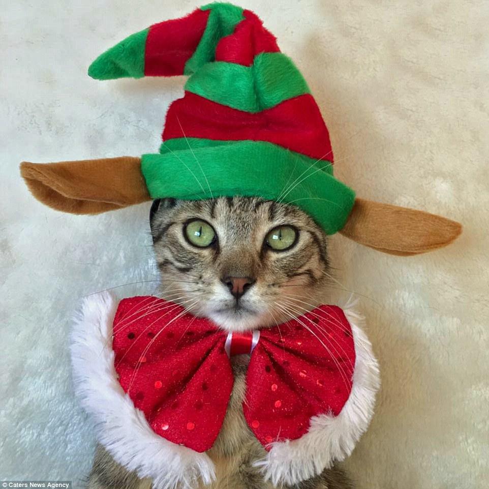 Christmas Adorable Kitty