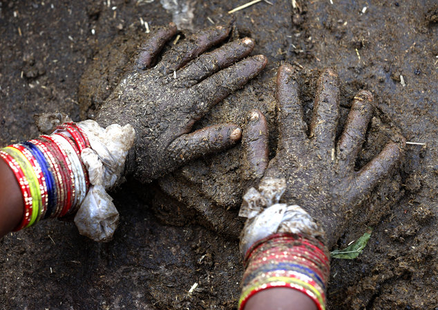 Indian Farmers Turn To Ebay And Amazon To Sell Cow Dung