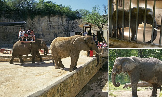 Defense Of Animals List Of Worst 10 Zoos For Elephants In