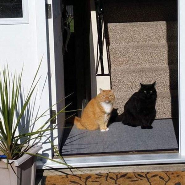 optical illusions find cat # 17