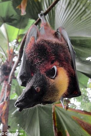 Luzon boasts highest concentration of weird mammals ...