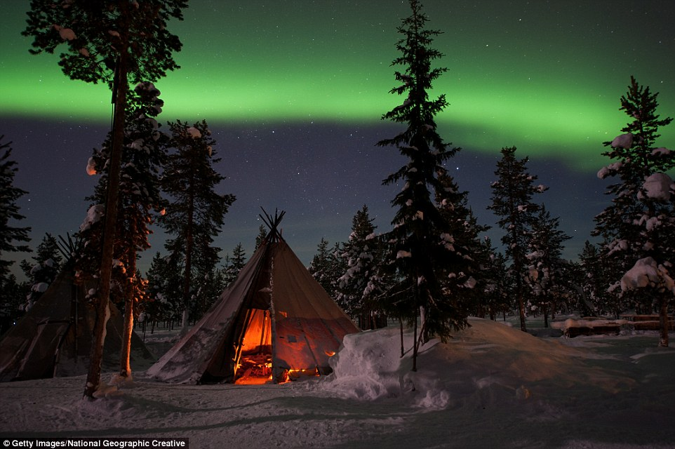 Northern Lights Dogs