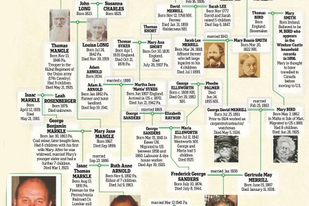 Star wars genealogy tree 4k pictures 4k pictures full hq wallpaper create a beautiful family tree chart online print it as a poster choose your favorite family tree blog about infographics and data visualization cool altavistaventures Gallery