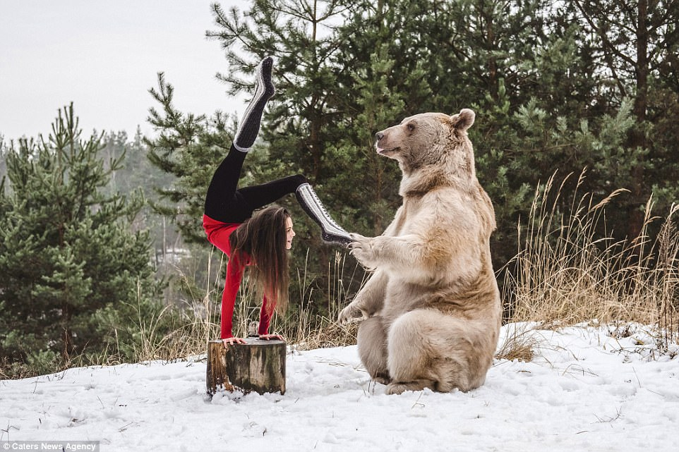 Acrobat flaunts her flexibility and gets a peck from bear ...