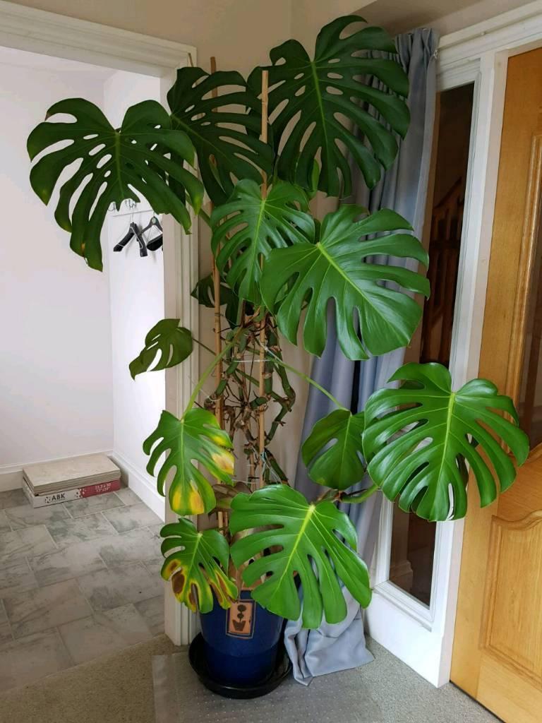 Indoor Plants Hanging