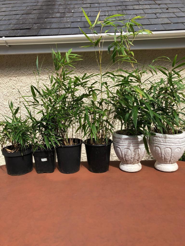 Plant Pots Leeds