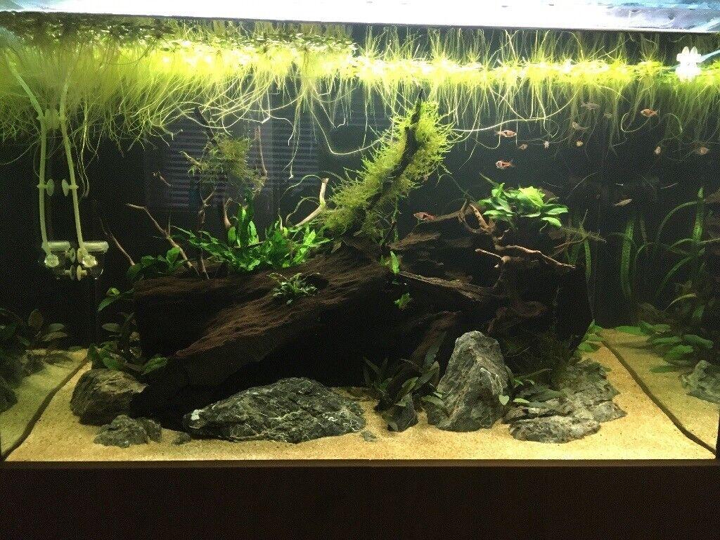 Frogbit Plant Care