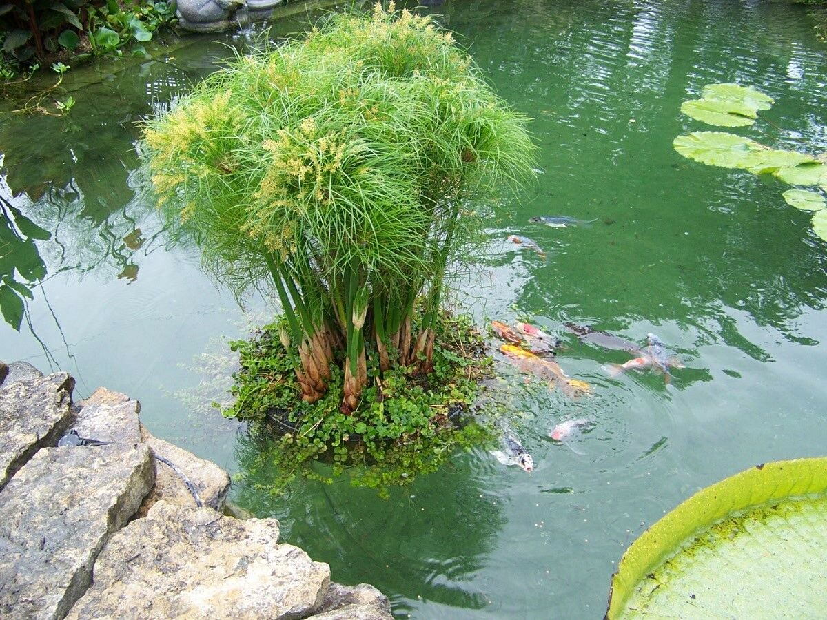 Garden And Pond Lights Aquarium Flower
