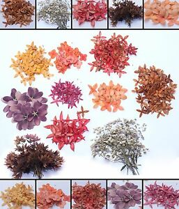 Pressed Flower Collections Organic Natural Dried Flowers DIY ART     Image is loading Pressed Flower Collections Organic Natural Dried Flowers  DIY