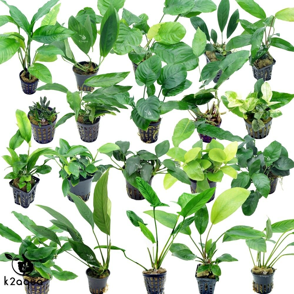Aquatic Plant Supplies