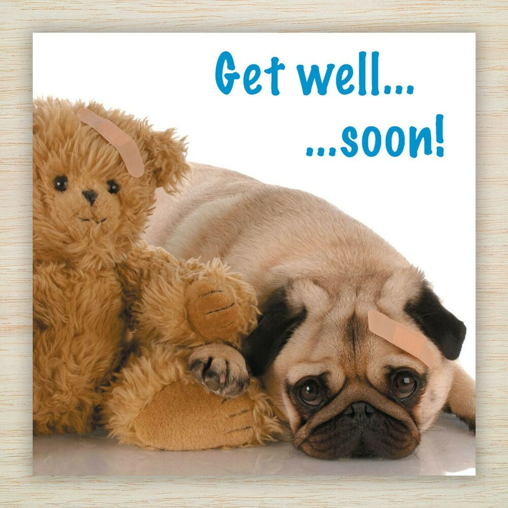 Soon Animals Get Well Cards Stuffed
