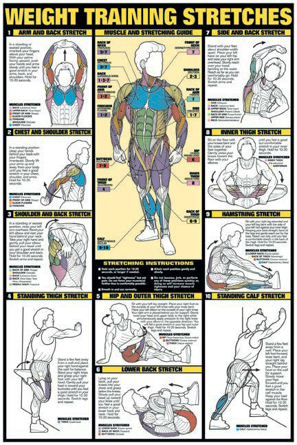 Weight Training Stretches 24 Quot X 36 Quot Paper Poster Nfc10 A