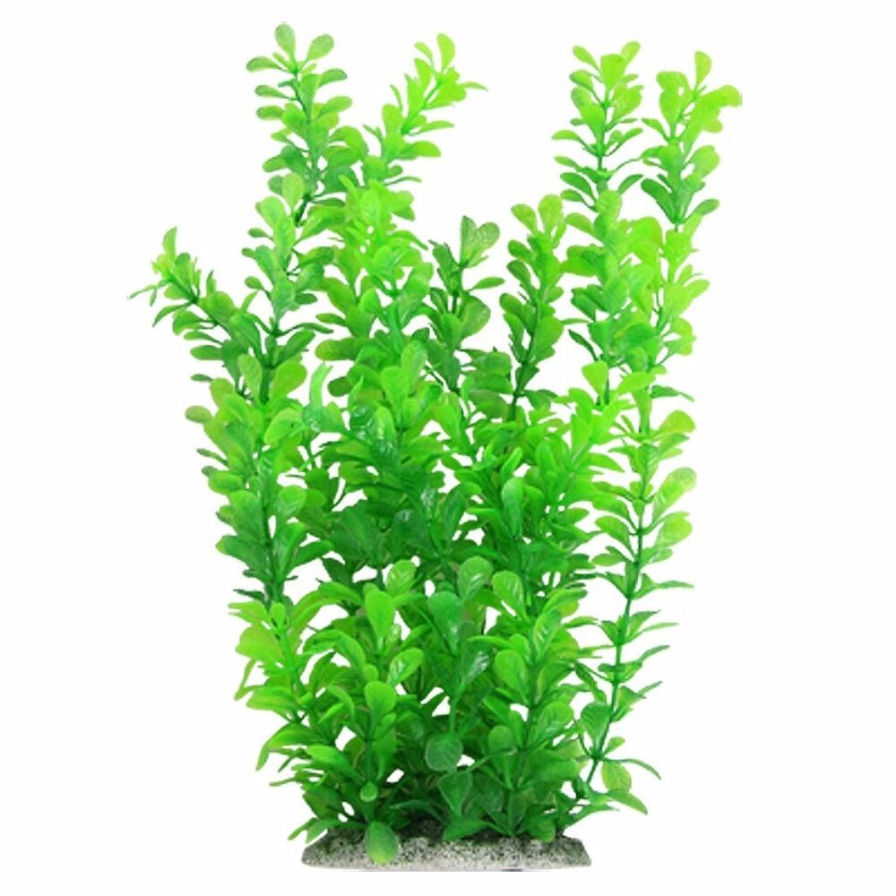 Underwater Plants Sale