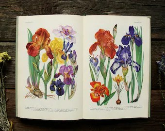 Flowers drawing   Etsy Decorative Plants of the USSR   88 Beautiful Color Plates   Hardcover     Vintage Botanical Book  1986  Flowers Drawing Illustration Print