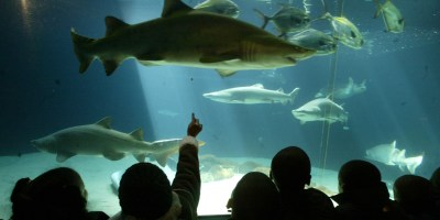 A New New York Aquarium | HuffPost