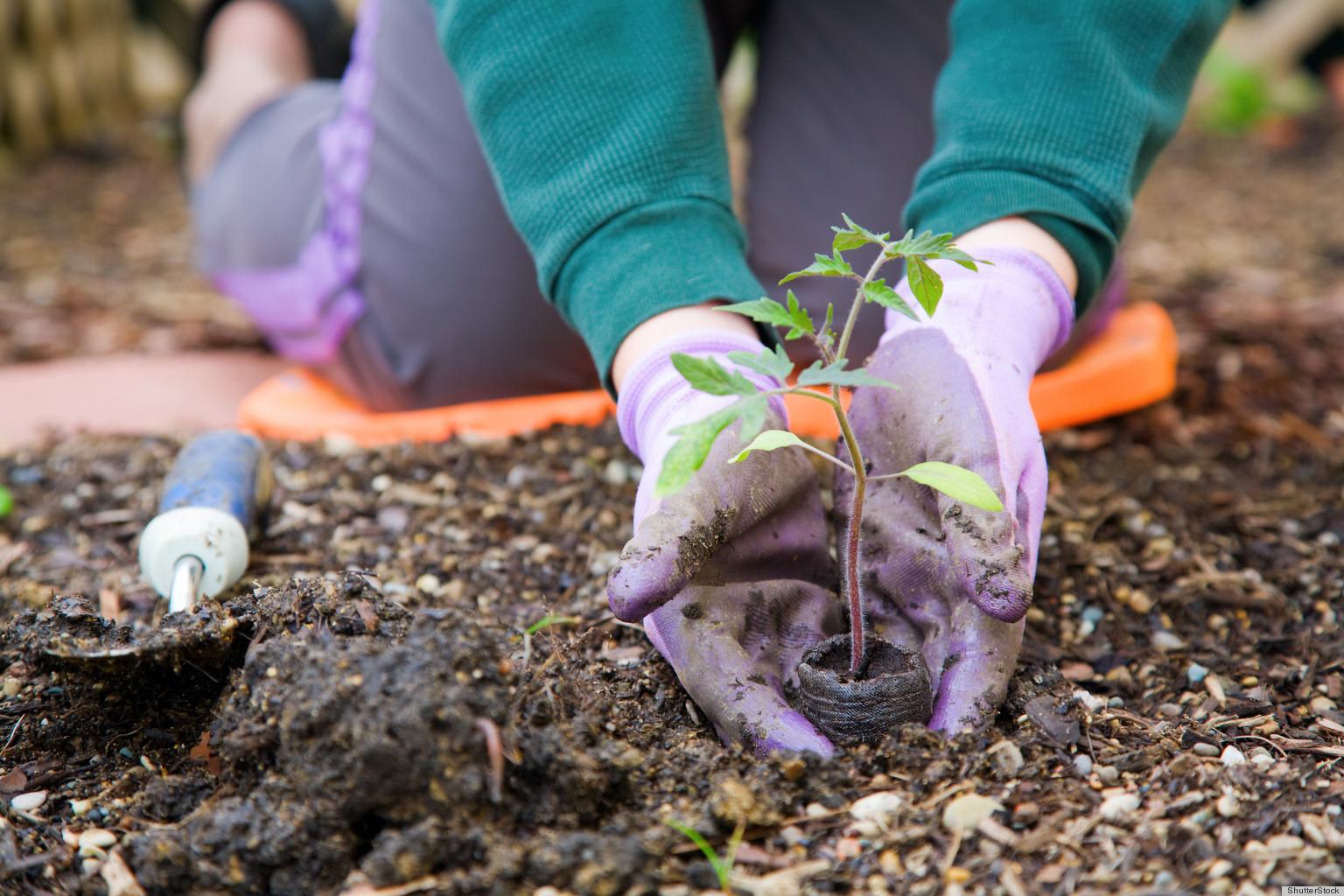 Overcoming Seasonal Affective Disorder With Gardening ...