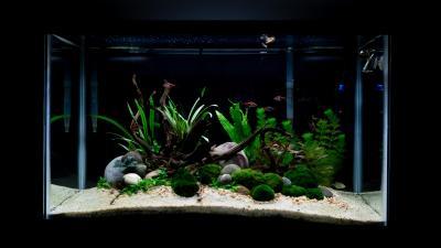 29 gallon island aquascape: 1 week after planting : Aquariums