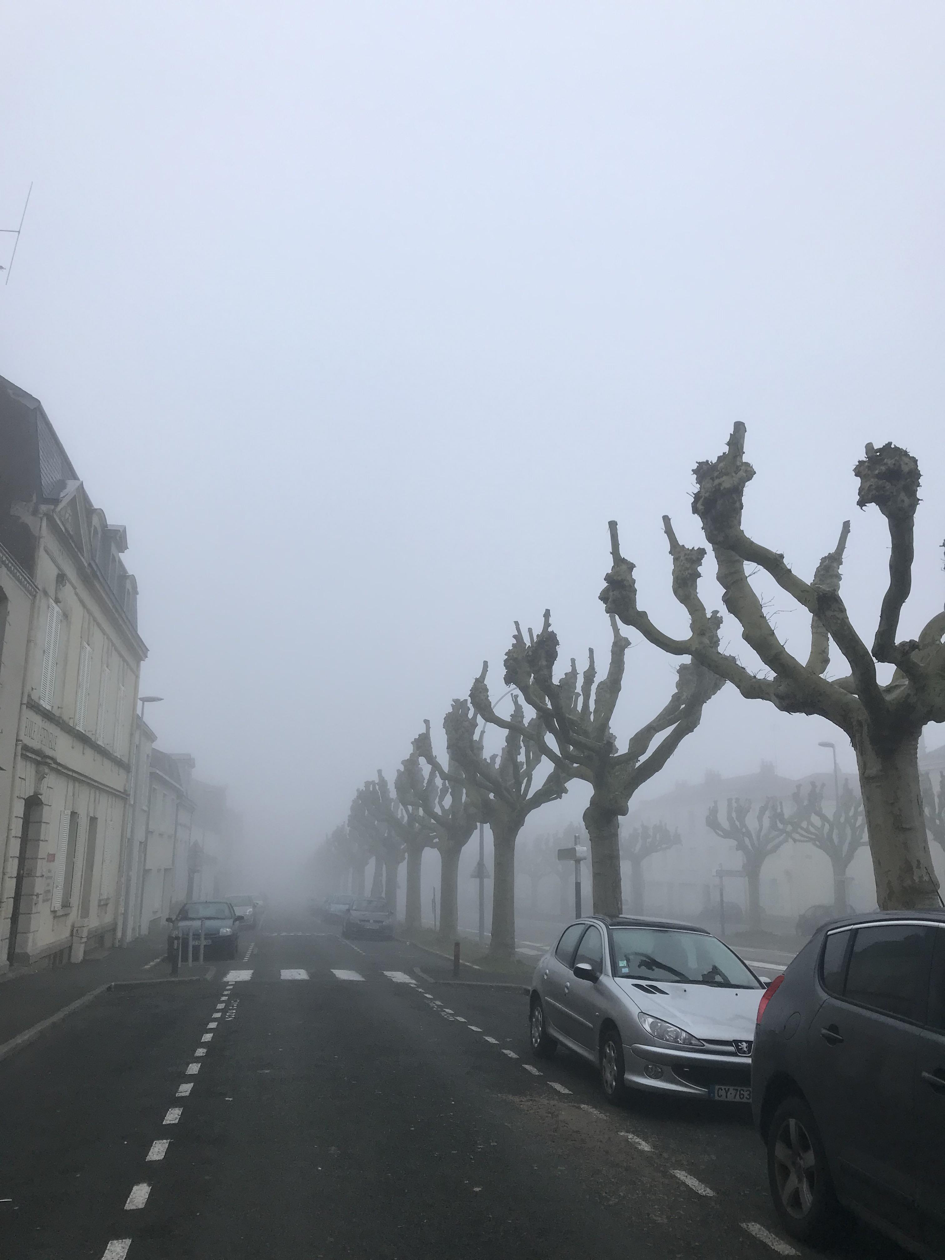 Trees I Lorax Speak Name My