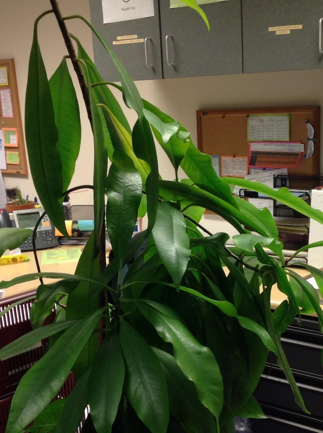 Indoor Plants Big Leaves