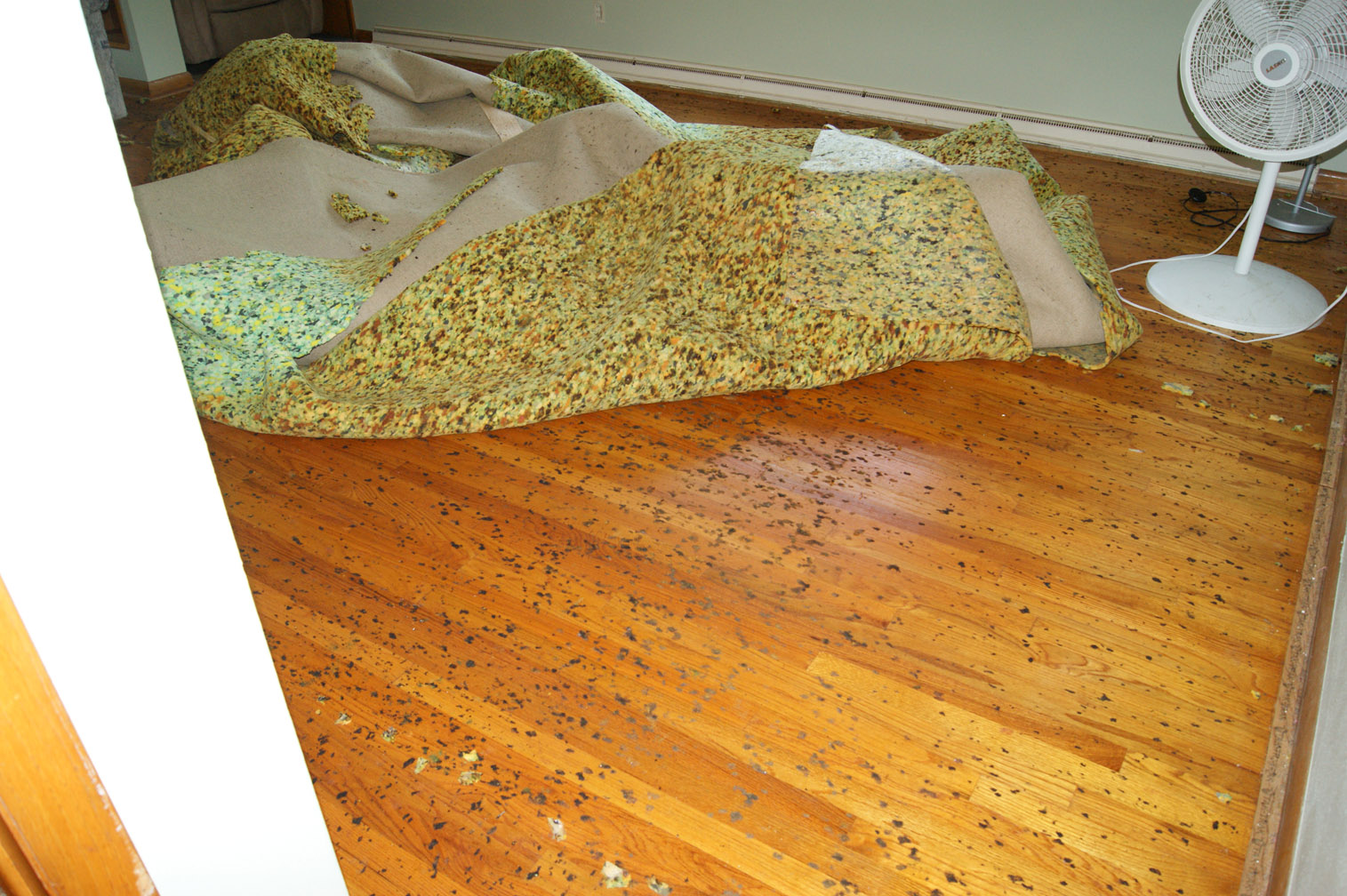 Diy Dry Carpet Cleaning